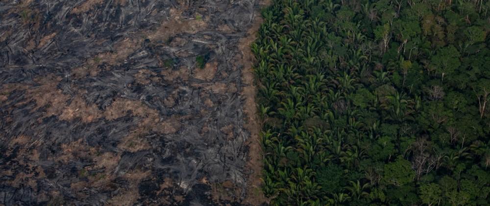 Amazonas Regenwald Verwüstung durch Feuer