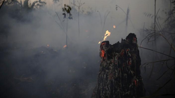 Brasilien - Brände im Amazonas