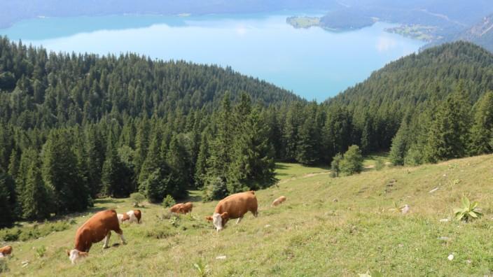 Schilderaktion des almwirtschaftlichen Vereins mit Hinweisen zum richtigen Umgang mit Kühen