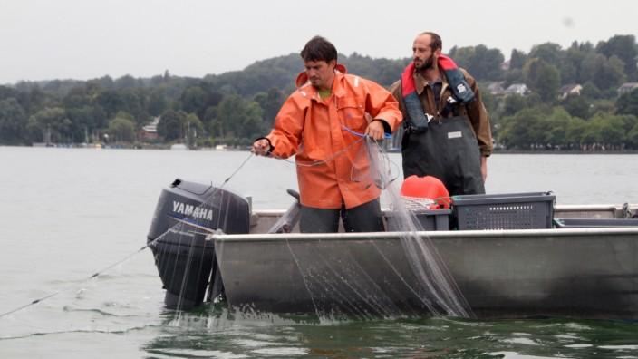 Fischer überprüfen Fischbestände