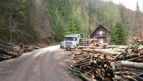 Holzeinschlag in Rumänien