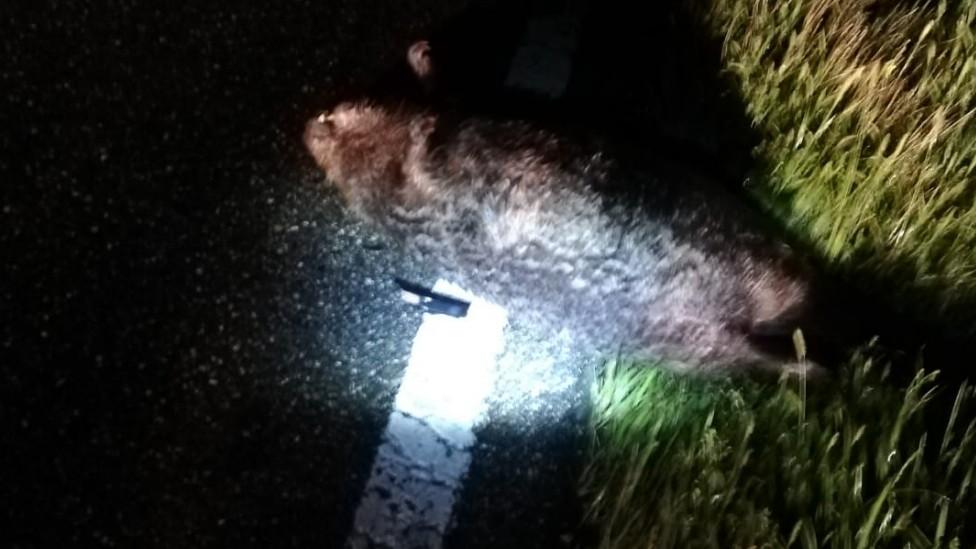 """Freising: """"Großen Hamster"""" gerammt - Taxifahrer spricht"""