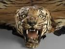 TigerfellPL BRIT 6-054(1)