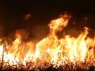 Heftige Waldbrände im Amazonasgebiet (Vorschaubild)