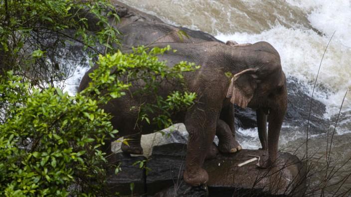 Thailand: Elefanten-Baby fällt Wasserfall runter - Fünf Tiere sterben beim Rettungsversuch