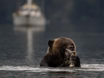 Kanada Grizzly Kreuzfahrt