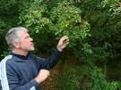 Niedersachsen: frisch gepflücktes Laub auf dem Teller (Vorschaubild)
