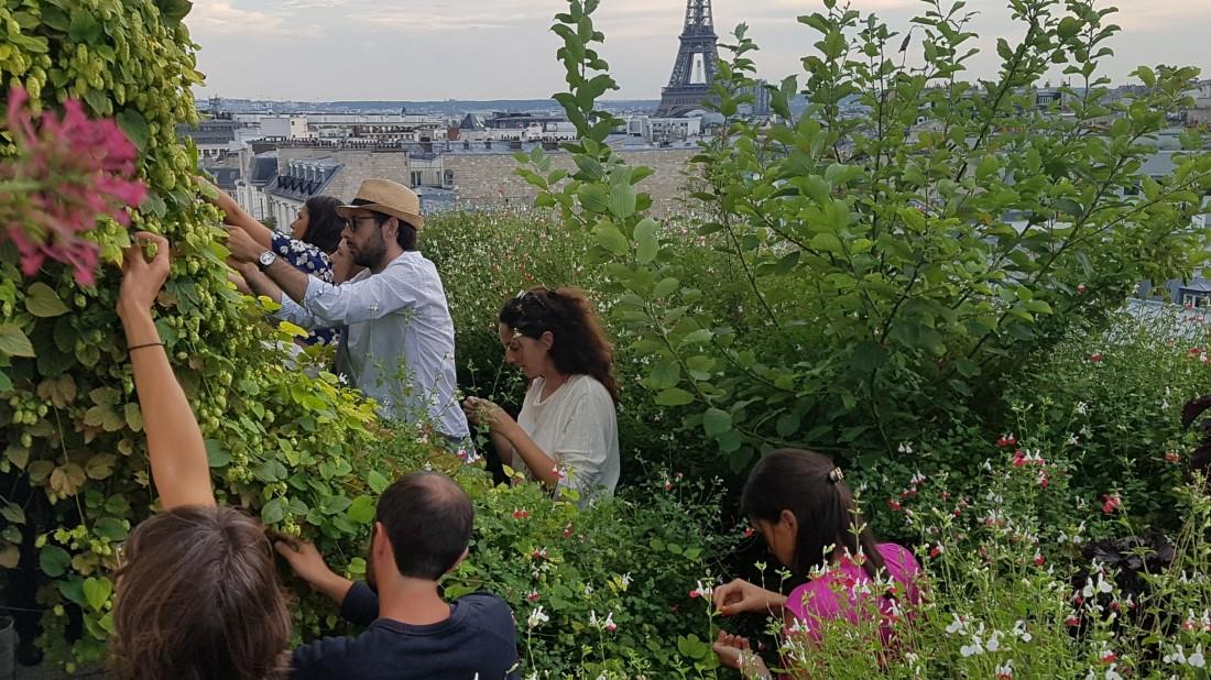 Paris und seine Dachgärten: Gemüse von oben