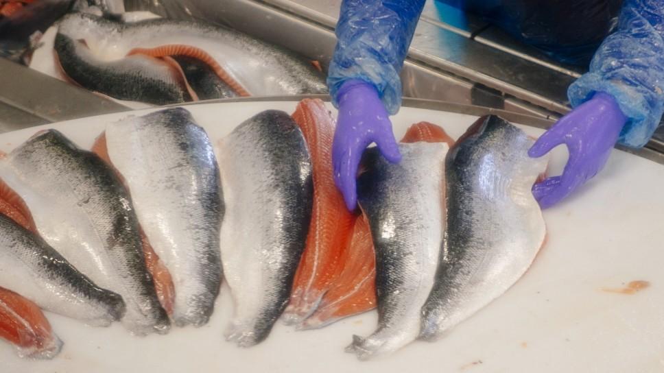 Umweltschutz - Wie der Lachs zum Vegetarier wird