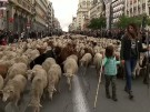 Die Schafe sind los! (Vorschaubild)