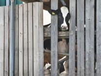 Allgäuer Tierschutz-Skandal: Anklage gegen weitere Bauern