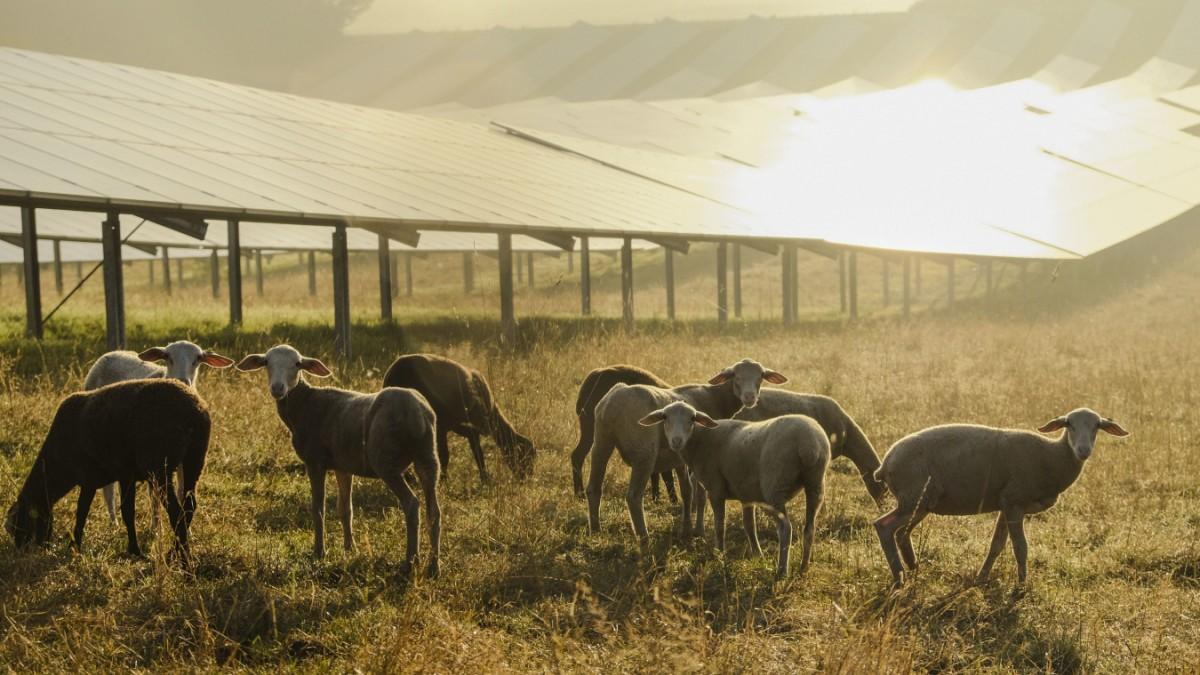 Agrophotovoltaik - So werden Felder zu Solarkraftwerken