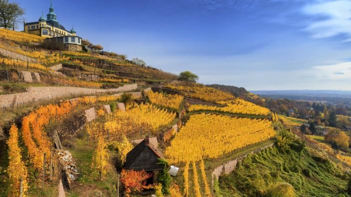 Herbstliche Weinberge und Spitzhaus bei Radebeul Sachsen Deutschland