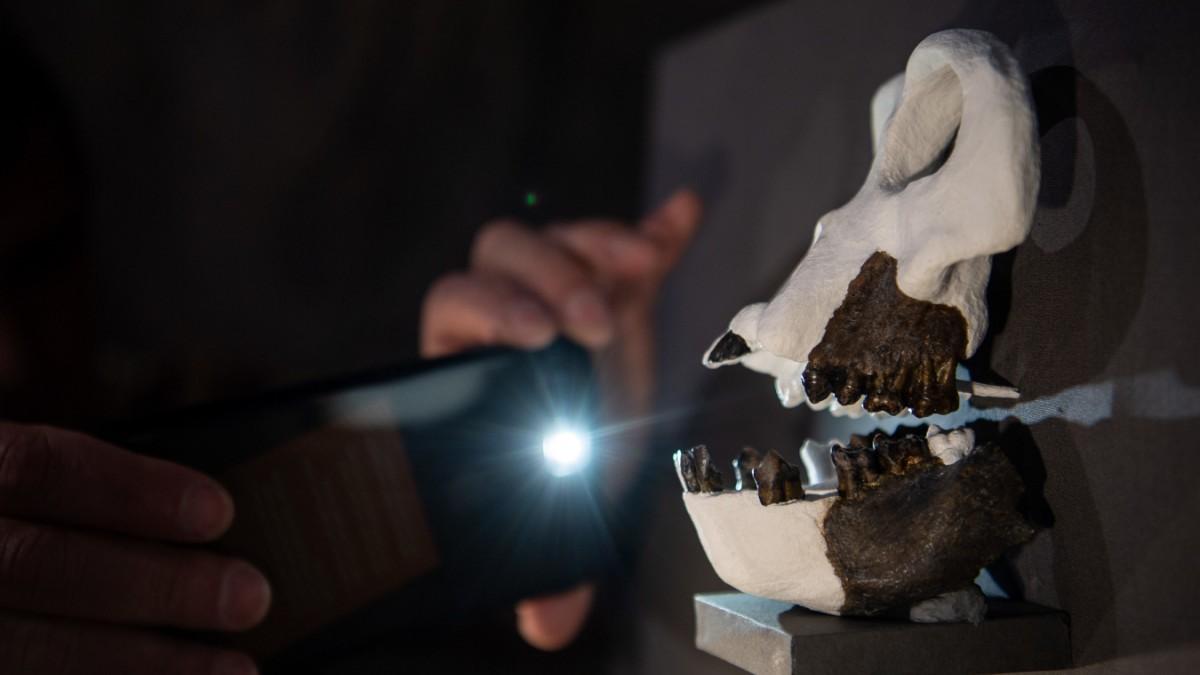 Danuvius guggenmosi: Menschenaffen-Fund im Allgäu