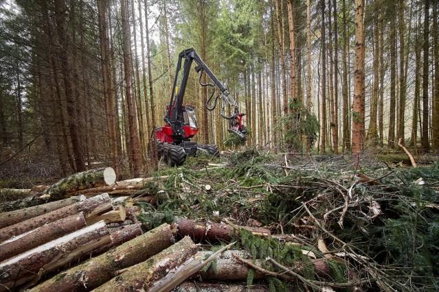 30 Jahre Kampf gegen Monokultur im Ebersberger Forst.
