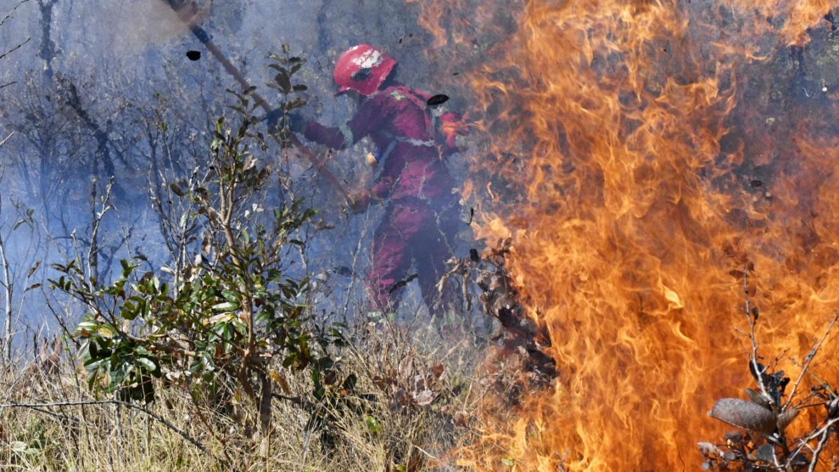Interview: Tropische Trockenwälder in Gefahr