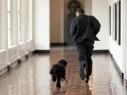 Die Tiere im Weißen Haus, First Pets