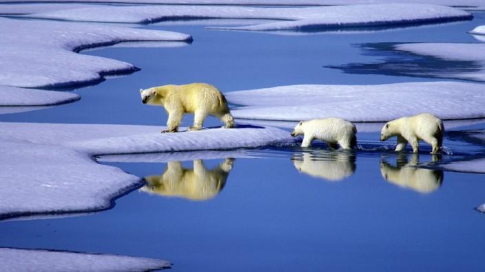 Die Arktis - riesig, eiskalt und reich an Bodenschätzen