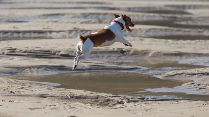 Halbstarke Vierbeiner: Der Hund in der Pubertät