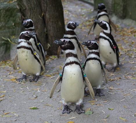 Erweiterung der Pinguin Anlage
