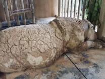Letztes Sumatra-Nashorn aus Malaysia gestorben
