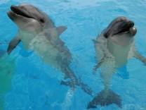 Neues Delfinarium in Griechenland - Großer Tümmler und Trainerin