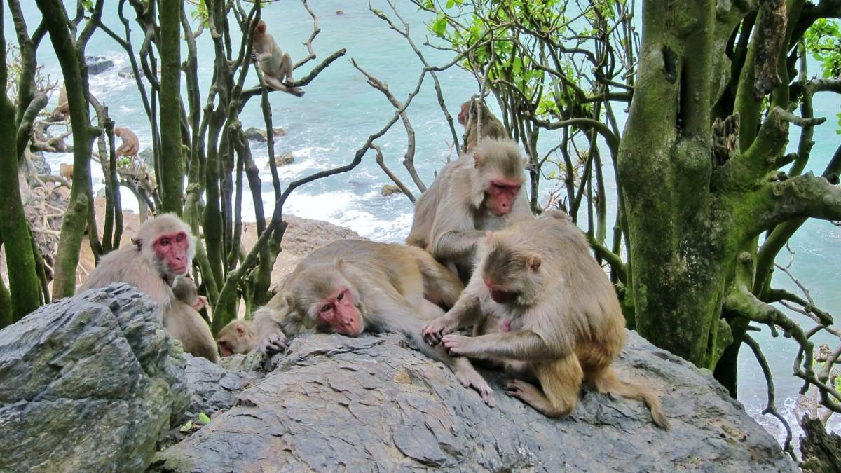 Verhaltensbiologie: Affen mit Freunden leben länger