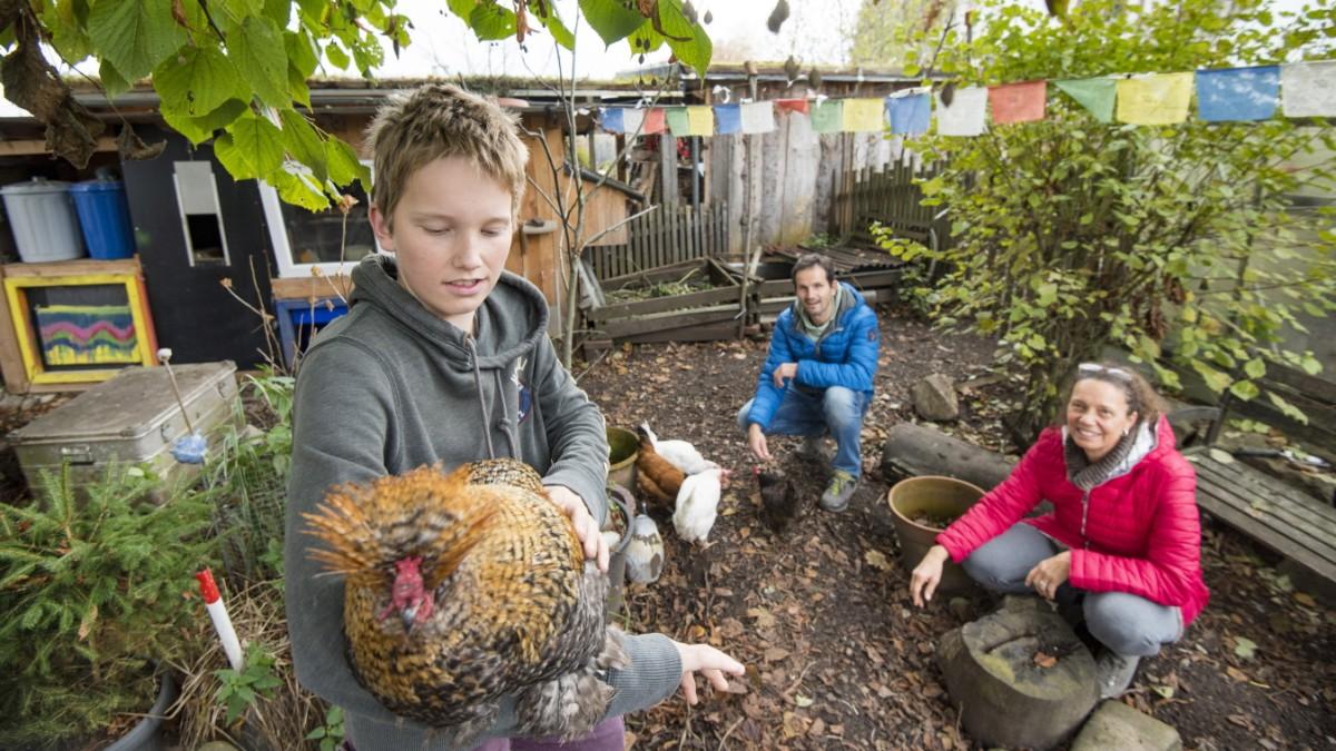 Starnberg - Hühner im eigenen Garten