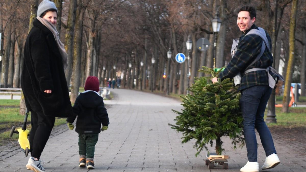 Wie die Münchner den perfekten Christbaum finden