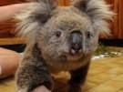 Sam erobert die Herzen der Australier (Bild)