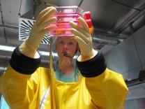 Ebolaforschung in Marburg