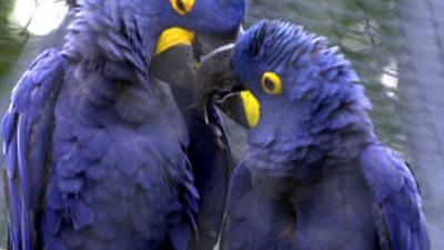 Papageien partnervermittlung bayern [PUNIQRANDLINE-(au-dating-names.txt) 49