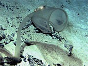Australische Unterwasserwelt; AFP
