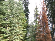 Waldsterben, USA