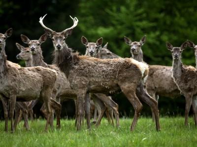 Isarauen an der Mittleren Isar: Auch im Naturwald wird gejagt