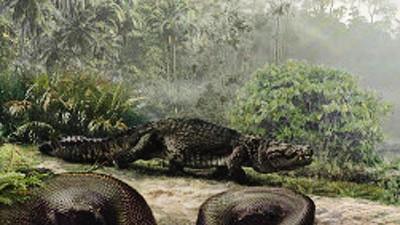 Schlangen Die größte Schlange aller Zeiten