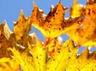 Herbst - Zeit zum Schwelgen (Bild)