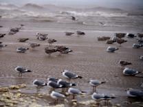 Sturmflut in Polen