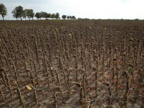 Government Considers Aid To Drought-Affected Farmers