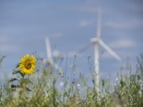 Hochneukirch, DEU, 22.07.2020 Windraeder und Sonnenblume Wind wheels sunflower *** Hochneukirch, DEU, 22 07 2020 Wind t