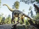 Brachiosaurus_Credit Dinosaurier Museum Altmühltal