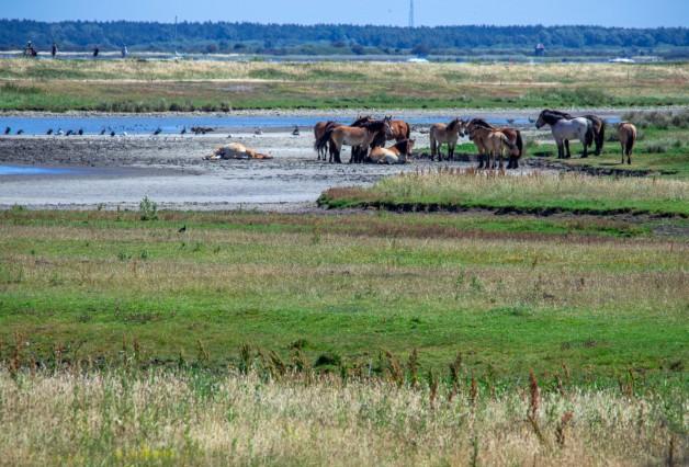 Nationalpark Vorpommersche Boddenlandschaft; Nationalpark Vorpommersche Boddenlandschaft