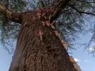 Äthiopien: Ernte in Gefahr (Vorschaubild)