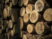 Holz liegt gestapelt in einem Wald bei Klitten, 10.09.2018. Klitten Deutschland *** Wood is stacked in a forest near Kl