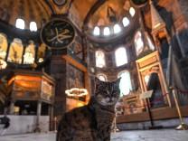Streunende Tiere in der Türkei: Umweltschutz und Tierschutz in einem Automaten
