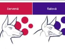 Corona in Tschechien: Sehnsucht nach Schlappohr-Zeiten