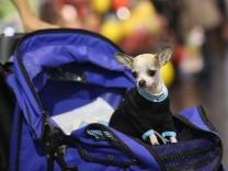 Hunde und Kinderwagen: Gassi fahren