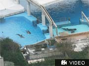 Seaworld Killerwale; AP