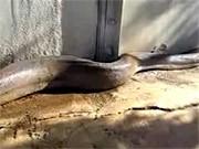 das leben der anderen schlange long snake
