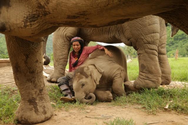Kuscheln mit Elefanten: Tierschützerin Lek Saengduean Chailert im Elephant Nature Park